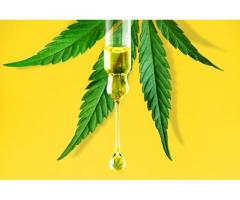 https://promosimple.com/giveaways/cannaverda-cbd-oil-scam-or-legit-is-it-worth-for-you/