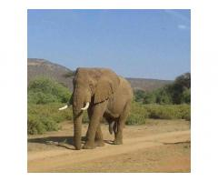 Safari in Kenya with Denhum Holidays